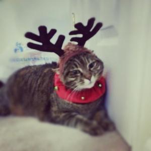 Bella_Reindeer