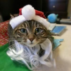 Bella_Santa
