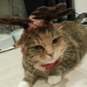 Pucca_Reindeer