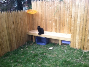 Jean Claude inspects CCL's new backyard security measures.