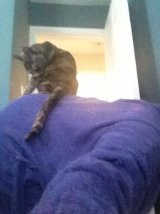 Koko jumps on my back