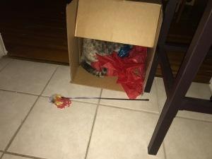 Koko takes a nap